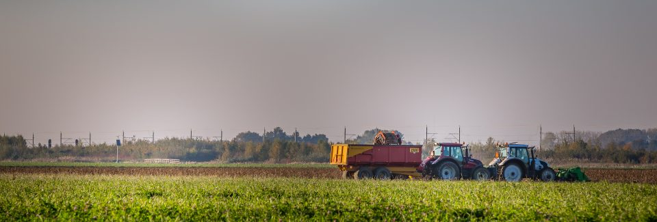 aardappels rooien - akkerbouw