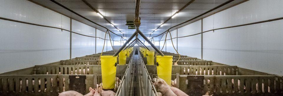 varkensstal varkenshouderij vacature